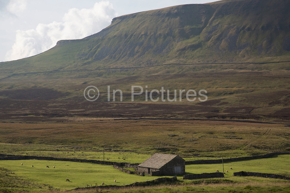 Traditional farm building on the grassland at the foot of Pen-y-ghent or Penyghent fell in the Yorkshire Dales. It is one of the Yorkshire Three Peaks and lies some 3 kilometres east of Horton in Ribblesdale. This rocky outcrop can be seen from miles around all over the Dales making it one of the most recognisable landmarks in the landscape. North Yorkshire, England, UK.