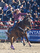 Homestead Rodeo