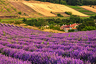 Bulgarian lavender field at sunrise