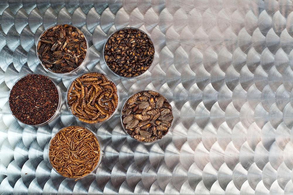 Betim_MG, Brasil.<br /> <br /> Insetos criados na Nutrinsecta para consumo humano  animal. Na foto grilo, baratas e larvas de tenebre.<br /> <br /> Insects created in Nutrinsecta for human and animal consumption. In this photo crickets,  cockroaches and Tenebrio molitor .<br /> <br /> FotoJOAO MARCOS ROSA / NITRO
