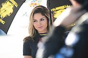 November 11-13, 2020. Lamborghini Super Trofeo, Sebring: 69 Grid girls, Wayne Taylor Racing, Lamborghini Greenwich, Lamborghini, Huracan Super Trofeo EVO,