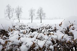 Sneg, sneži, zasnežena narava, on February 12, 2018 in Kranj, Kranj, Slovenia. Photo by Ziga Zupan / Sportida