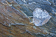An autumn leaf blends in with the rock that it fell upon on a frosty morning near Spada Lake in Snohomish County, Washington.