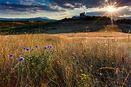 Violet thorns at sunset