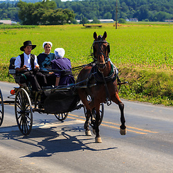 Strasburg, PA - June 19, 2016: An Amish buggy in summer on a county road in Lancaster County, PA.