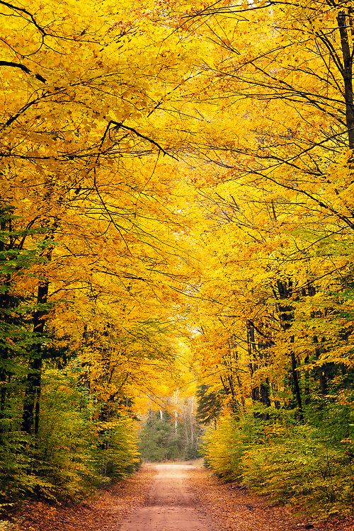 """Autumn Tree Tunnel<br /> <br /> 12"""" x 18""""  print<br /> <br /> See pricing page for more information.<br /> <br /> Please contact me for custom sizes and print options including canvas wraps, metal prints, assorted paper options, etc. <br /> <br /> I enjoy working with buyers to help them with all their home and commercial wall art needs."""