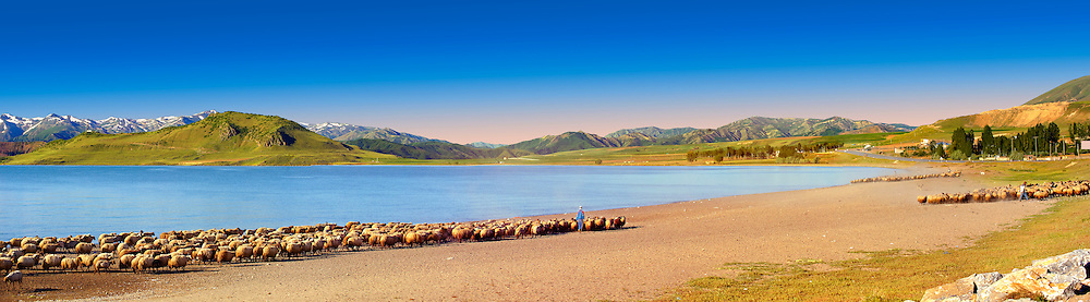 Shepherds & their sheep on the shotre of Lake Van, Turkey 6 .<br /> <br /> If you prefer to buy from our ALAMY PHOTO LIBRARY  Collection visit : https://www.alamy.com/portfolio/paul-williams-funkystock/lakevanturkey.html<br /> <br /> Visit our TURKEY PHOTO COLLECTIONS for more photos to download or buy as wall art prints https://funkystock.photoshelter.com/gallery-collection/3f-Pictures-of-Turkey-Turkey-Photos-Images-Fotos/C0000U.hJWkZxAbg