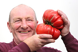 © Licensed to London News Pictures. 18/09/2015. Harrogate, UK. Picture shows Joe Atherton with his first prize winning Gigantomo Tomato at the Giant Veg competition at the Harrogate Autumn Flower show. Photo credit: Andrew McCaren/LNP