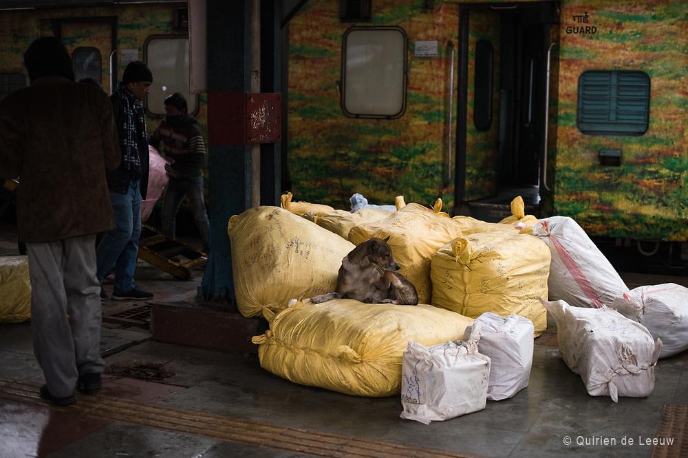 Dog and luggage, New Delhi train station