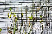 Golzern Lake, Switzerland - lake and plant life - abstract shot.