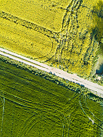 Aerial view of countryside road crossing agricultural field, Girona, Spain.