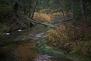 Shallow river bends of river Strīķupe in autumn | Vidzeme, Latvia