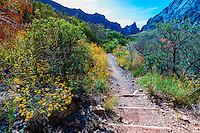 The Window Trail, Chisos Basin (Chisos Mountains), Big Bend National Park, Texas USA.