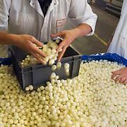 Nederland Giessen 26 augustus 2009 20090826 ..Serie over levensmiddelensector                                                                                      .HAK fabriek, verwerking groente. Medewerkers controleren zilveruitjes. HAK vegetables, checking the product silver outings..Foto: David Rozing