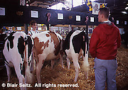 Pennsylvania Farm Show, Harrisburg, PA, Milk Cows, Farm Animal judging