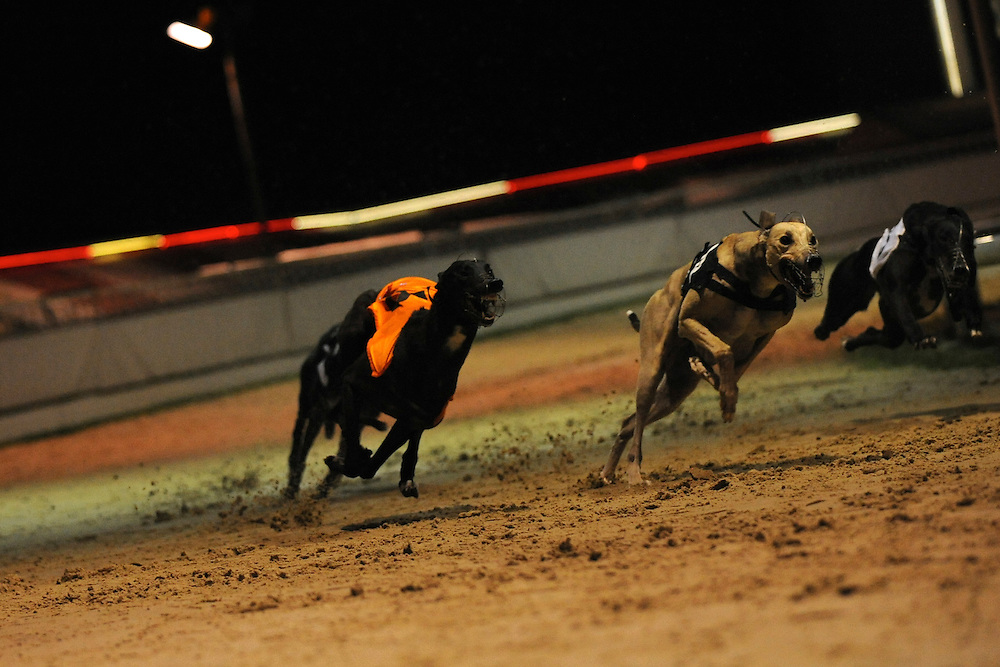 Walthamstow, England.  August 16, 2008.  Greyhounds tear around the track at Walthamstow Stadium on Saturday,  the final night of racing in its 75 year history. Forced to close as a result of diminishing profits and poor attendance, record crowds flocked to take in the festivites one last time...