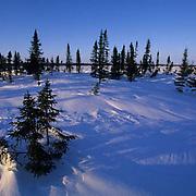 Wapusk National Park.Northern Manitoba. Canada.