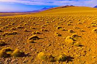 Landscape near Lagunas Miscanti and Meniques, Atacama Desert, Chile
