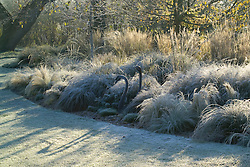 Low sunlight casting shadows on the lawn. Two bronze swan sculptures amongst the grasses border on a frosty morning in winter. Design John Massey, Ashwood Nurseries