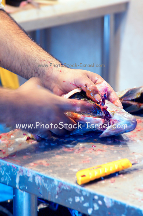 removing cleaning and de-gutting a fresh fish at a fish vendor, Jaffa Israel February 2007