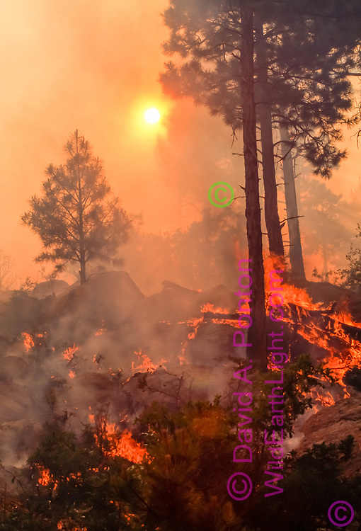 Fire burns along floor of ponderosa pine forest with the sun nearly obscured by smoke during a prescribed burn at Escobas Mesa in Bandelier National Monument, Jemez Mountains, New Mexico, June 17, 1998. © 1998 David A. Ponton