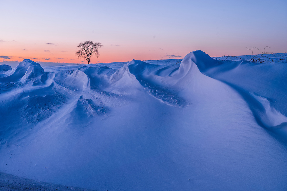 Wind-blown ridges of snow, and view to lone tree in snowy filed in winter, Mansfield, CT