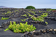 La Geria landscape. Lanzarote, Canary Islands, Spain
