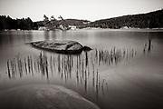 Reeds - McGregor Bay, Ontario, Canada