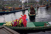 Besides vegetables, different kinds of flowers are also cultivated in the farming land of Dal lake, where I have seen a canopy-like structure to protect the flowers from harsh sunlight. These flowers are sold in the morning market of Dal. Srinagar, © Sandipa Malakar.