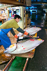 raw bluefin tunas, Thunnus sp., on cart, being unloaded to a small wholesale store to be filleted immediately after auction, Tsukiji Fish Market or Tokyo Metropolitan Central Wholesale Market, the world's largest fish market, hadling over 2,500 tons and over 400 different kind of fresh sea food per day