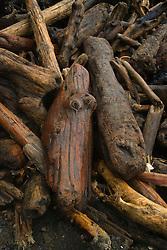 Driftwood at Third Beach, Olympic National Park, Washington, US