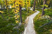The Opabin Plateau trail above Lake O'hara, Yoho National Park, British Columbia, Canada