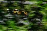 September 30-October 1, 2011: Petit Le Mans. 4 Jan Magnussen, Richard Westbrook, Oliver Gavin,Chevrolet Corvette C6 ZR1, Corvette Racing