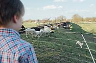 12.04.2020 Ostersonntag, Umflutkanal zw. Magdeburg und Biederitz.<br /> <br /> Eine Schafherde zu Ostern, ein Lamm hat Spass am Hang - schon etwas Klischee. Am Umflutkanal zwischen Magdeburg und Biederitz kann man aber auch von einem aktiven Hochwasserschutz sprechen, wenn die Schafe nur auf den Deichhängen grasen.<br /> <br /> ©Harald Krieg