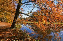 Schaep en Burgh, s-Graveland 's-Graveland, Wijdemeren Herfstblad, Autumn leave