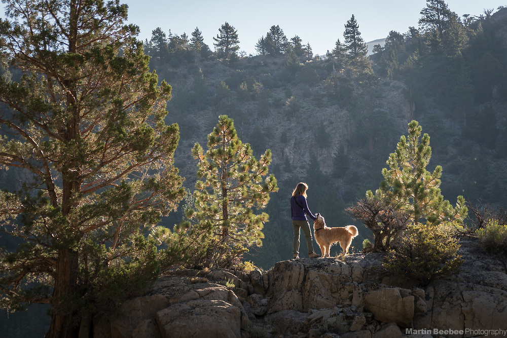 Woman hiking with her dog (golden retriever), Hoover Wilderness, Humbolt-Toiyabe National Forest, California