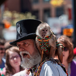 York, PA / USA - May 8, 2016: A bearded man with a monkey entertained people at the City of York Annual Mother's Day Street Fair.
