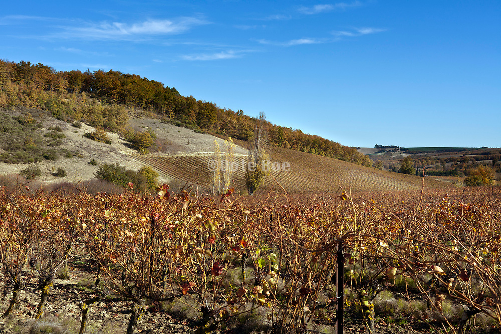 vineyard during autumn season France in the Languedoc Aude