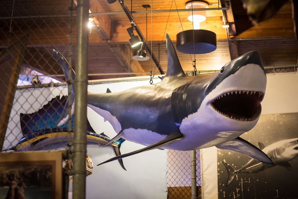 A taxidermy great whike shark on display at the Cabrillo Marine Aqurium in San Pedro, CA.