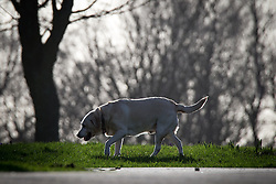 © Licensed to London News Pictures . 27/02/2014 . Buile Hill Park , Salford , UK .  A dog basks in the sunshine , its form outlined by bright spring sunshine . Glorious spring sunshine in Buile Hill Park this afternoon (Thursday 27th February 2014) as weather is predicted to take a colder turn . Photo credit : Joel Goodman/LNP