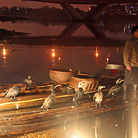 Asia, China, Guilin.  Cormorants wait on rafts from which they will dive and catch fish by lantern.