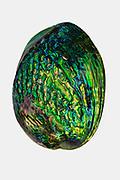 Paua shell detail, New Zealand
