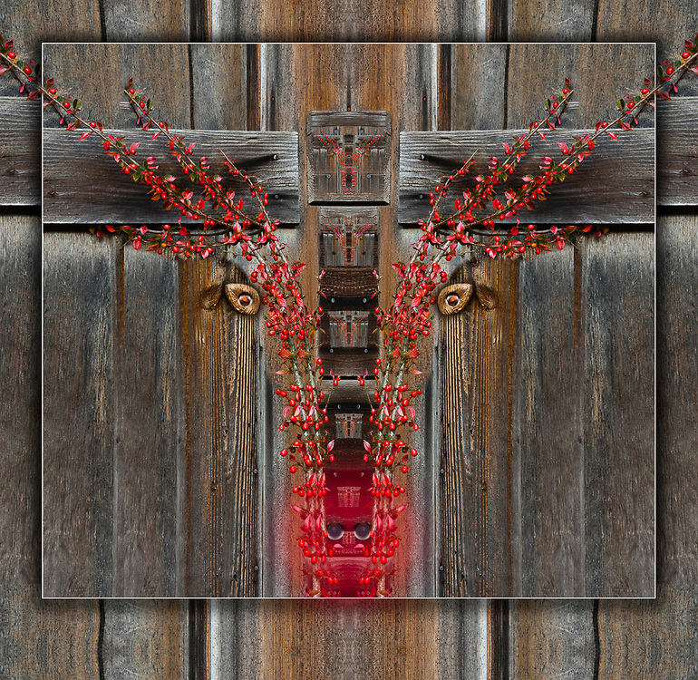 """""""Rudolf """",  derivative image created from a photo of a weathered wooden shed and red berry shrub, Clallam County, Olympic Peninsula, Washington, USA"""