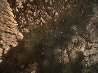 Aerial view of birds flying over swamp in Estonia.