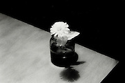A single flower on the corner of a table.