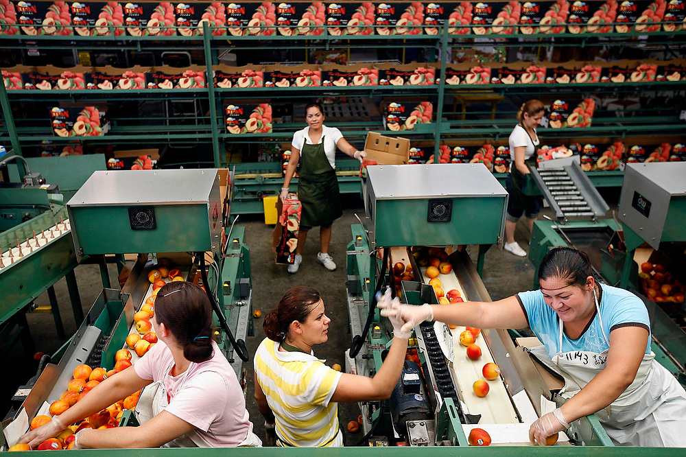 Veronica Caro Brion, 30, left, of Nayarit, Mexico gives a high five to friend and co-worker LiLiana Medina Pena, 24, of Santiago, Mexico after Brion helped unjam a conveyor belt that Pena uses to sort peaches.
