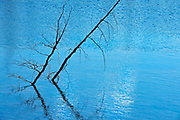 Two trees in a river, Dempster HIghway, Yukon, Canada