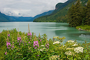 Chilkoot Lake at Haines, Alaska is surrounded by tall snow-capped mountains, green trees, and fireweed,