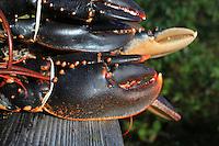 hummerlunchen, westcoast, lobster, paul svensson, kock, lobster lunch, kilopris hummer, www.dankullberg.com, photo dan kullberg,