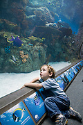 Young boy at the Tropical Pacific Gallery in the Aquarium of the Pacific in Long Beach.